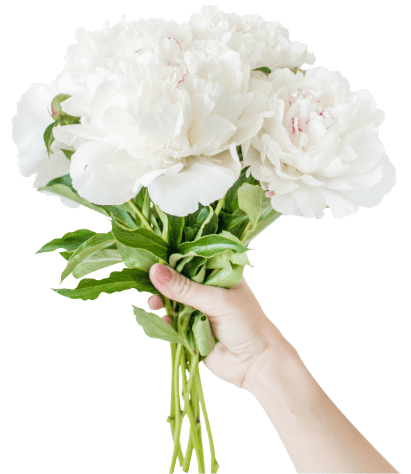 flores-linea-corporativa-clavel-rojo
