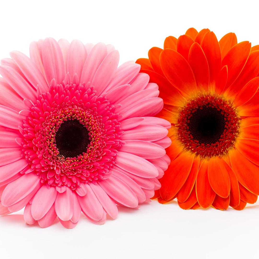 inicio-diseños-florales-para-toda-ocasion-fechas-especiales-floristeria-el-clavel-rojo