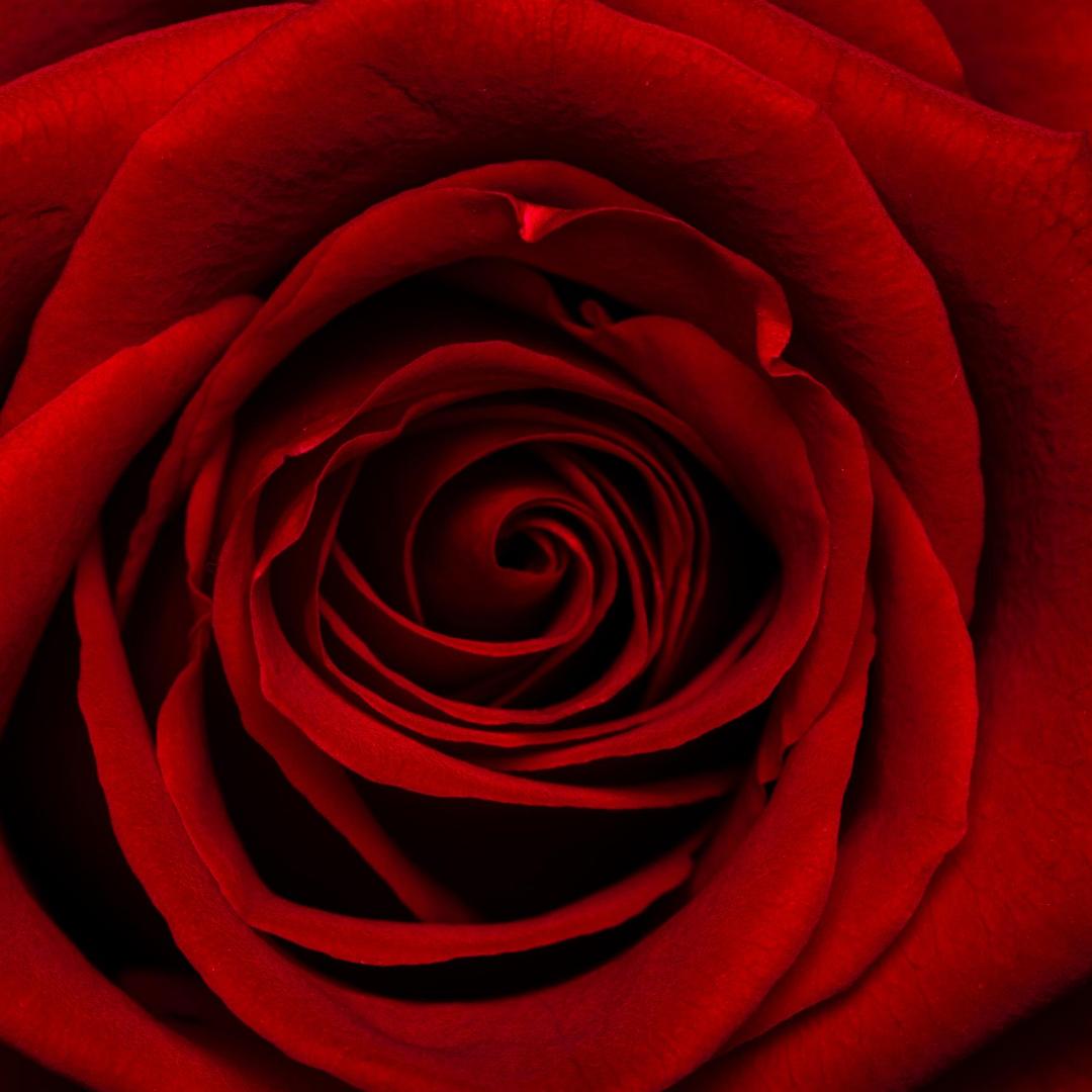 inicio-diseños-florales-para-toda-ocasion-sentimientos-floristeria-el-clavel-rojo